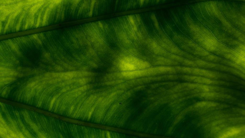A Leaf by redwolf518