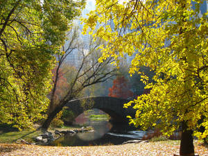 The Pond- The Bridge 2