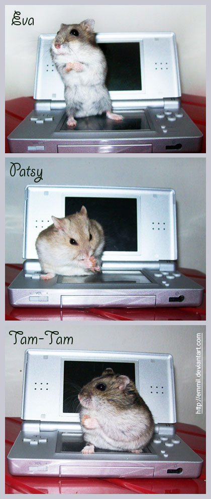 Hammies on DS by emmil