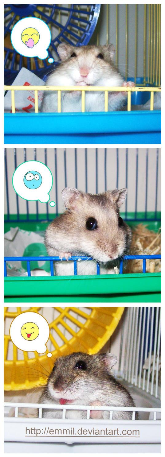 Emoticon Hamsters by emmil