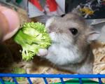 Broccoli FOReva