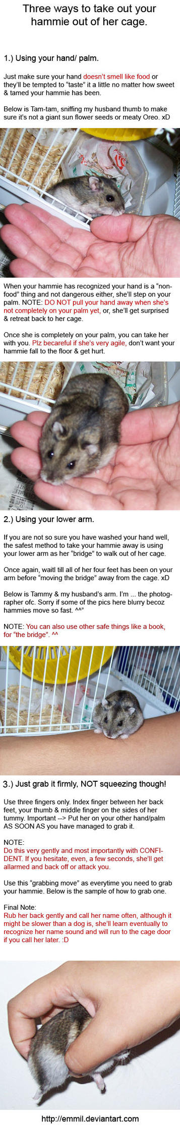 Hamster Tips - 1: Out of Cage by emmil