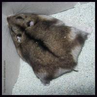 Hamster Rug by emmil