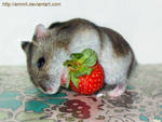 Strawberry Hump