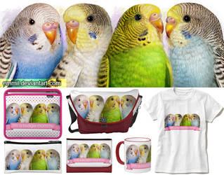Four budgerigars