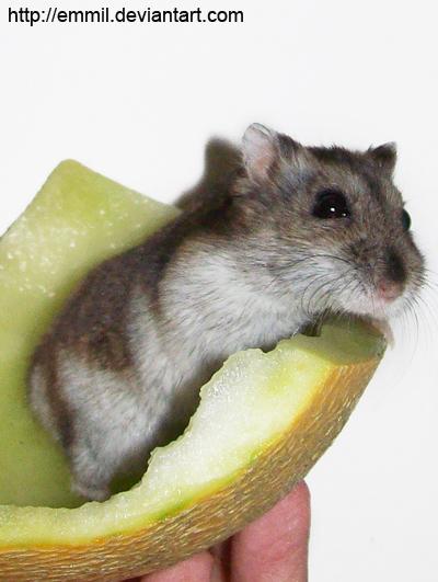 Melon Boat by emmil