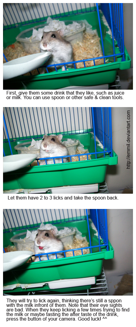 Hamster Tips - 2: Tongue show by emmil
