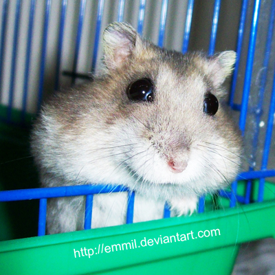 Eva said HI by emmil