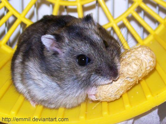Peanut nibbling by emmil