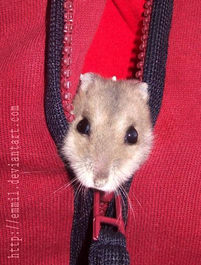 Hamster zipper by emmil