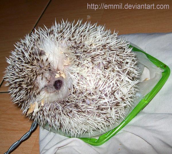 Fishing a hedgehog by emmil