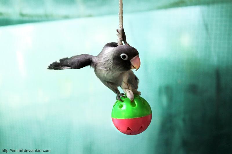 Papao swinging like Tarzan by emmil