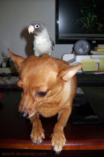 I pwn the dog by emmil