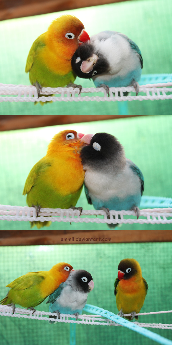 New love affair by emmil