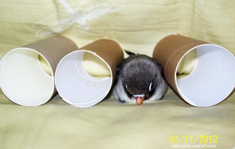 Tissue roll quiz! by emmil