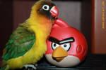 Pence and angry bird