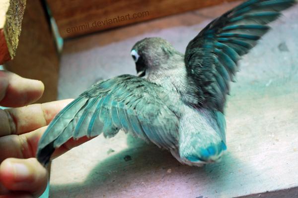 Bird molester by emmil