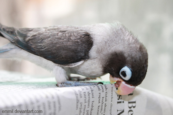 Pocky loves newspapers by emmil