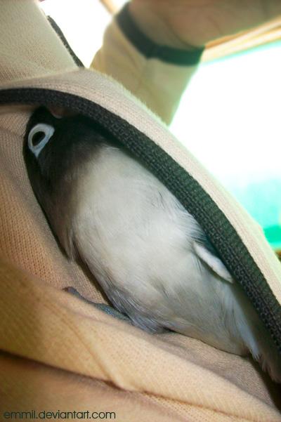Pocket bird by emmil