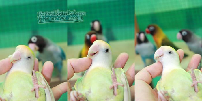 Birdie photo bombers by emmil