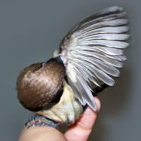 Preening My Wings by emmil