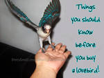 Read before u get yourself a lovebird