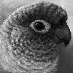 Commission: Kiwi by emmil