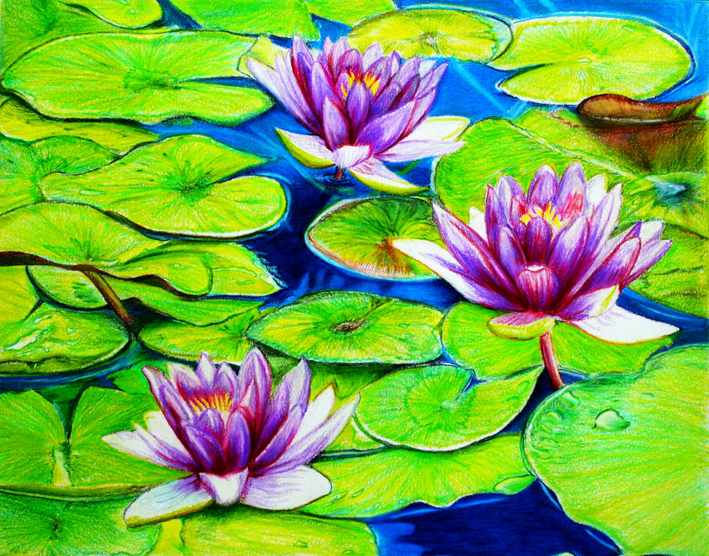 Water Lilies by PMucks