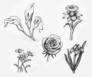 Botanical Sketches by PMucks