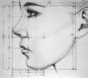 Profile Proportions