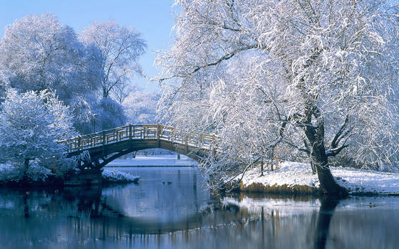 Beautiful Winter Scenery