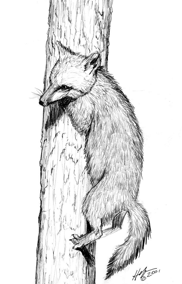 FOX SKETCH by HalHefnerART