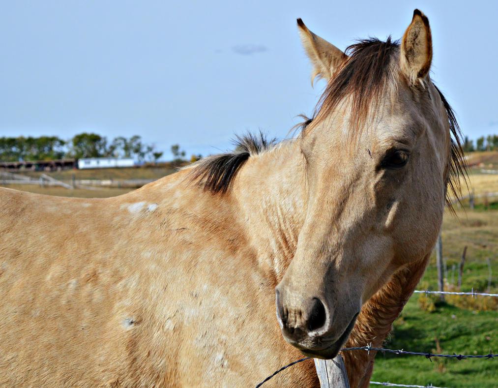 quarter horse head pictures - photo #21
