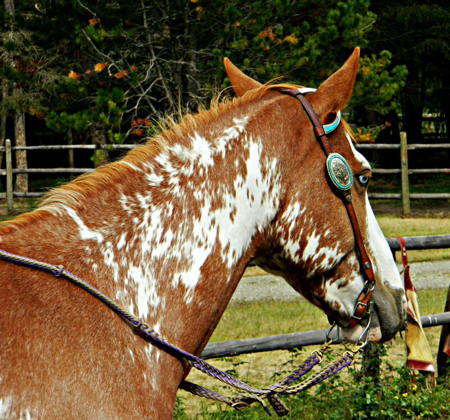 Chestnut Sabino Paint Horse by EquineGhost