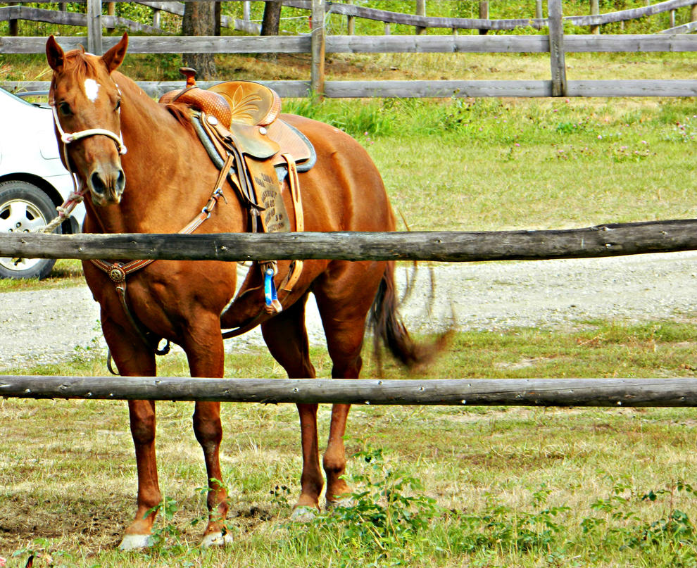 Chestnut Quarter Horse by EquineGhost