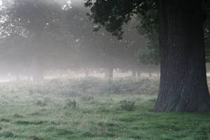 Stock... Misty Richmond Park by RhysBriers