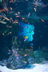Stock...  Atlanta GA Aquarium 2