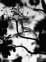dried love by AmeliePom