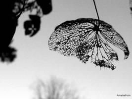 butterfly metempsychosis by AmeliePom