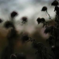 pilgrims by AmeliePom