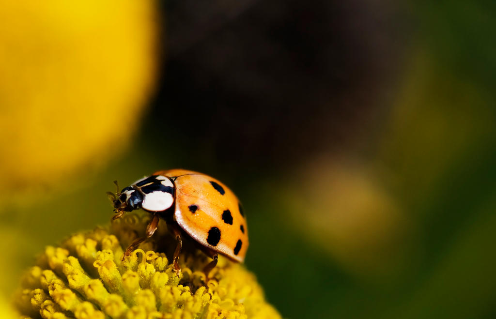 LadyBug by Instant-Ocean