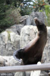 Sea Lion Tricks by WeirdFishPhotography