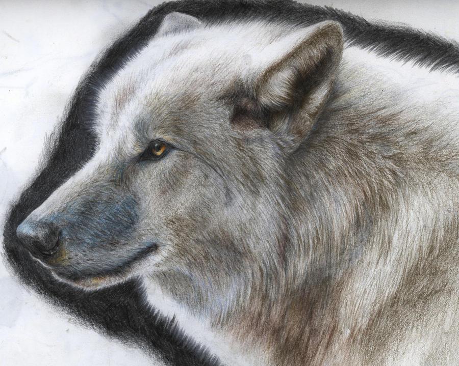 Wolf Portrait by Tofu123