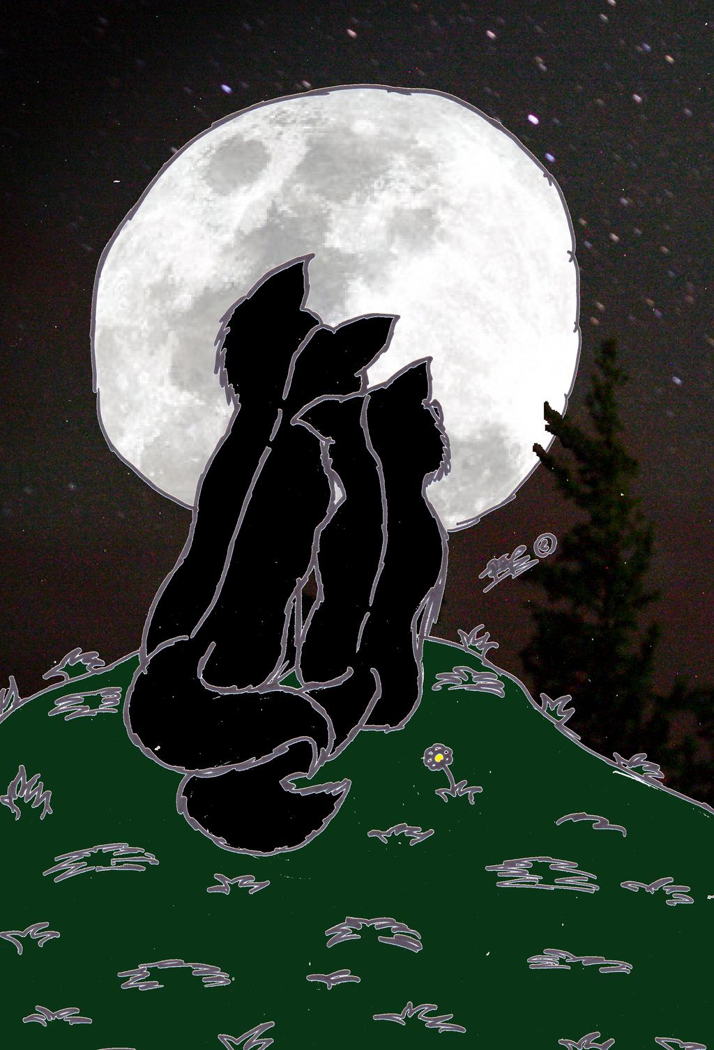 Wolfblood our love by chibigirl909 on deviantart