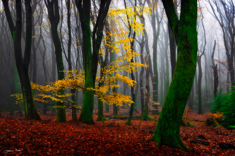 Het Speulderbos by jkrab