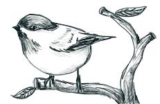 little bird. by snailbird