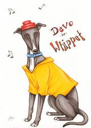 Devo the Whippet