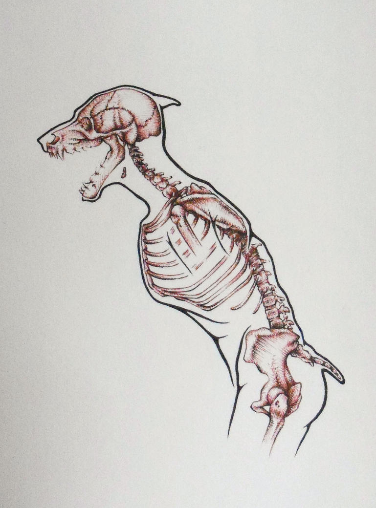 Werewolf Skeleton by Psyartista9 on DeviantArt