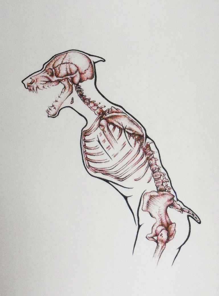 werewolf_skeleton_by_psyartista9 d3i94cf