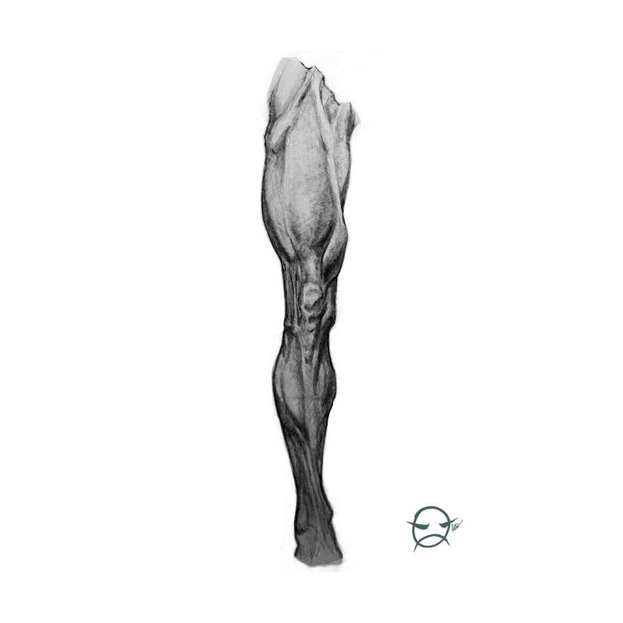 Leg Tonal Study by ELECTRICPENGUINS
